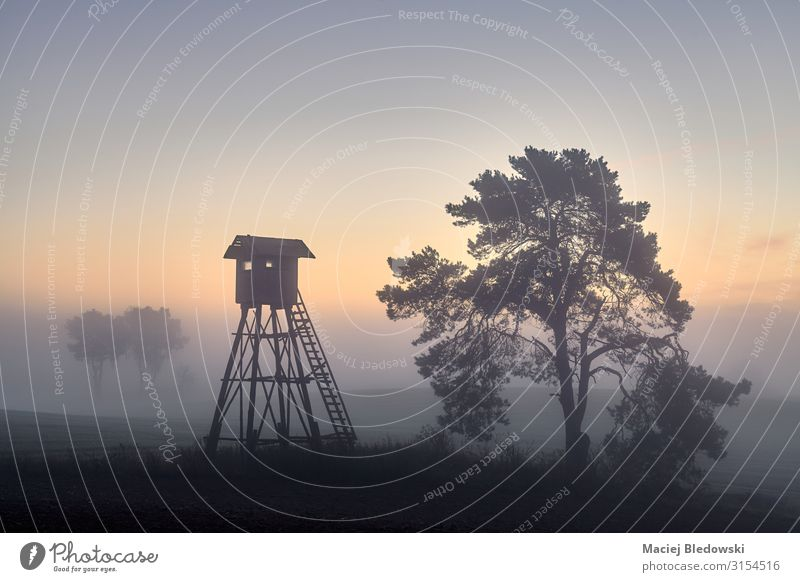 Deer hunting tower on a field in Autumn at dawn Sky Nature Landscape Tree Loneliness Wood Meadow Dream Fog Field Vantage point Uniqueness Hunting Rural Look out