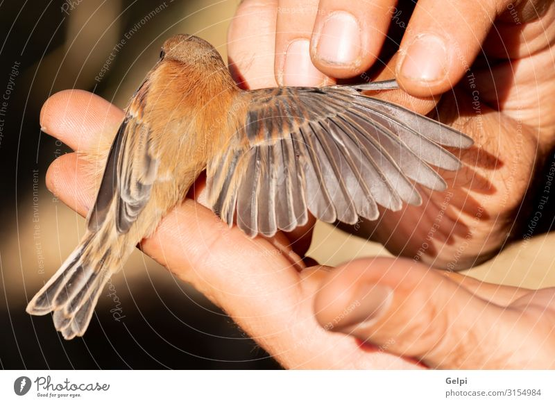 Someone sizing the wind of a small bird Happy Child Human being Hand Animal Park Bird Small Wild Brown Colour wildlife wing size Hold extreme macro Wound fauna
