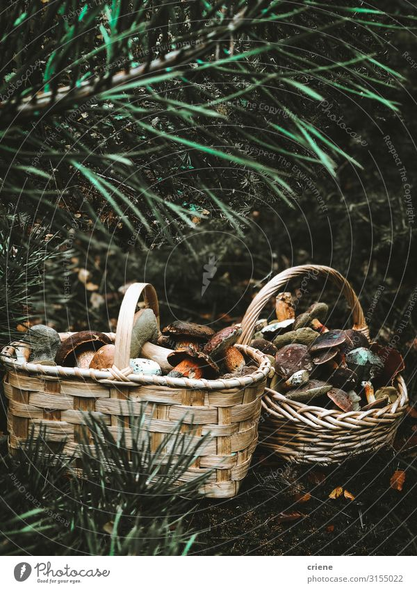 mushrooms in a basket Basket Mushroom Food Nature Grass Forest Wicker basket Autumn Isolated (Position) White Green Brown Picnic empty Natural Fresh Summer