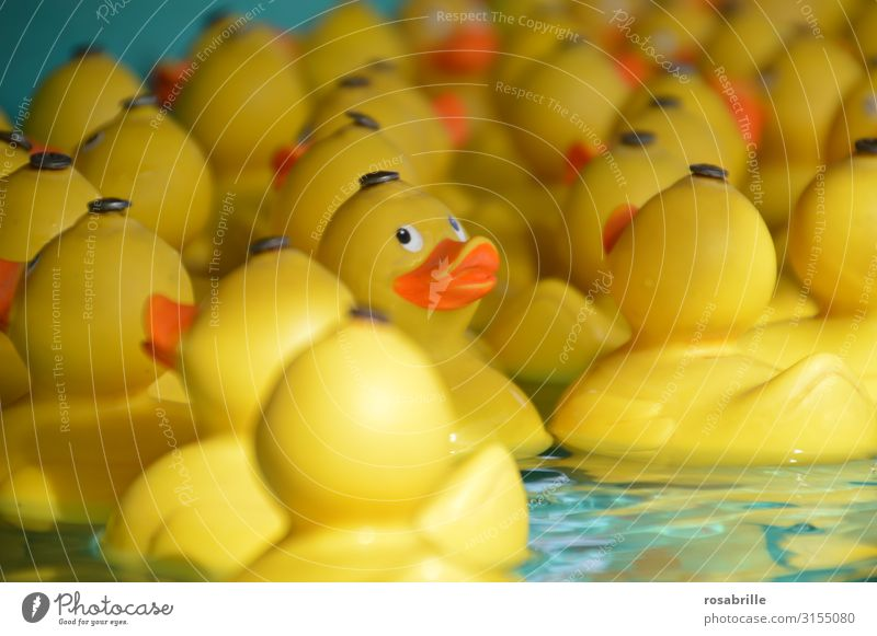 Child Water Joy Yellow Playing Swimming & Bathing Happiness Bathtub Many Float in the water Plastic Toys Fairs & Carnivals Sculpture Fishing (Angle) Duck