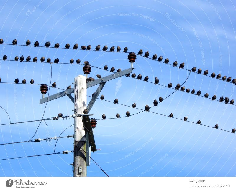 Waiting for departure... Energy industry Electricity High voltage power line Electricity pylon Animal Bird Group of animals Flock Crouch Communicate Sit Free