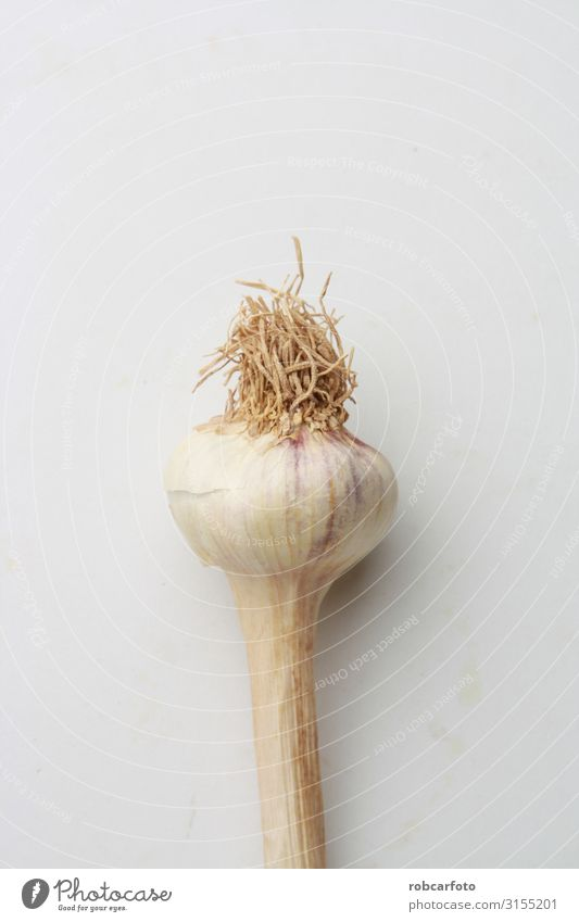 garlic head in color background Vegetable Herbs and spices Vegetarian diet Plant Fresh Natural White Organic Raw bulb Garlic healthy food Ingredients