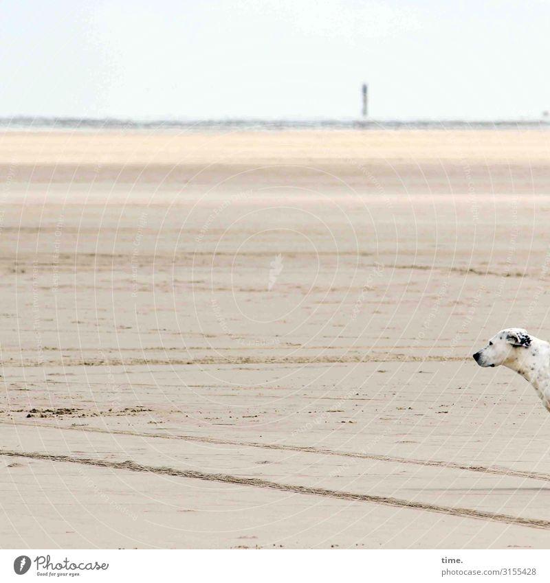 beach dweller Environment Nature Landscape Sand Sky Horizon Beautiful weather Coast Beach Ocean North Sea North Sea Islands Rømø Animal Pet Dog Animal face 1