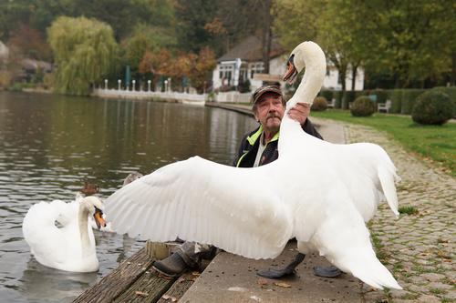 Human being Man Animal Adults Senior citizen Head Pair of animals Masculine Power 60 years and older Argument Self-confident Swan Rebellious Gigantic