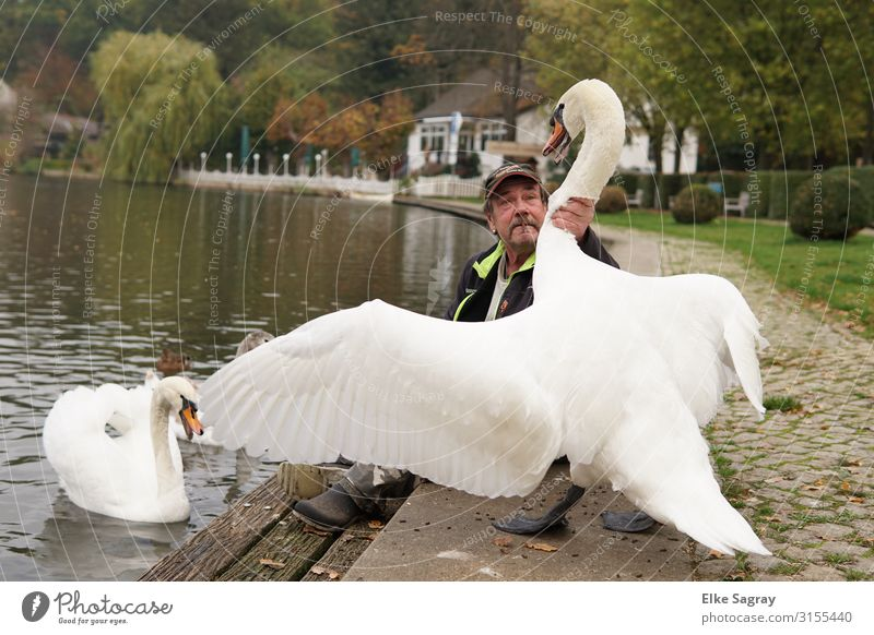 swan dive Masculine Man Adults Head 1 Human being 60 years and older Senior citizen Animal Swan Pair of animals Argument Gigantic Rebellious Self-confident