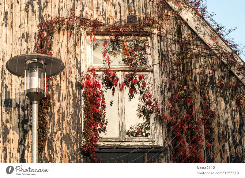 Lost window Living or residing Redecorate Lamp Autumn Beautiful weather Plant Ivy Village Small Town Capital city Downtown Old town