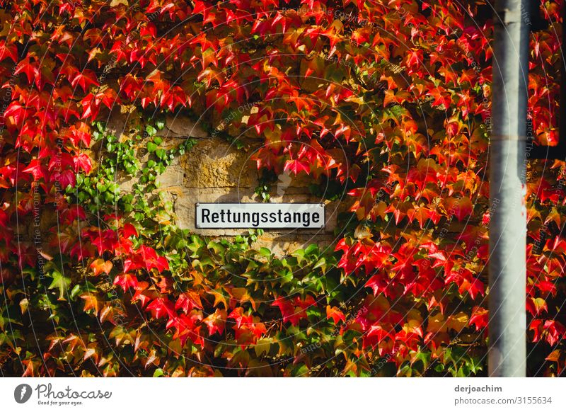 Plant Joy Autumn Wall (building) Environment Germany Wall (barrier) Exceptional Gray Trip Contentment Creativity To enjoy Authentic Beautiful weather Fantastic