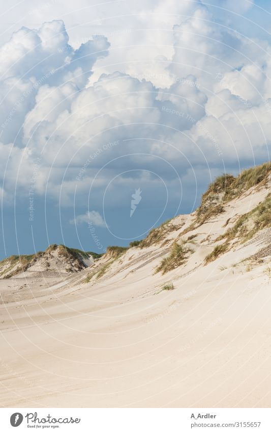 Beach with dune at the North Sea Senses Swimming & Bathing Vacation & Travel Tourism Trip Far-off places Freedom Summer Summer vacation Ocean Mountain Nature