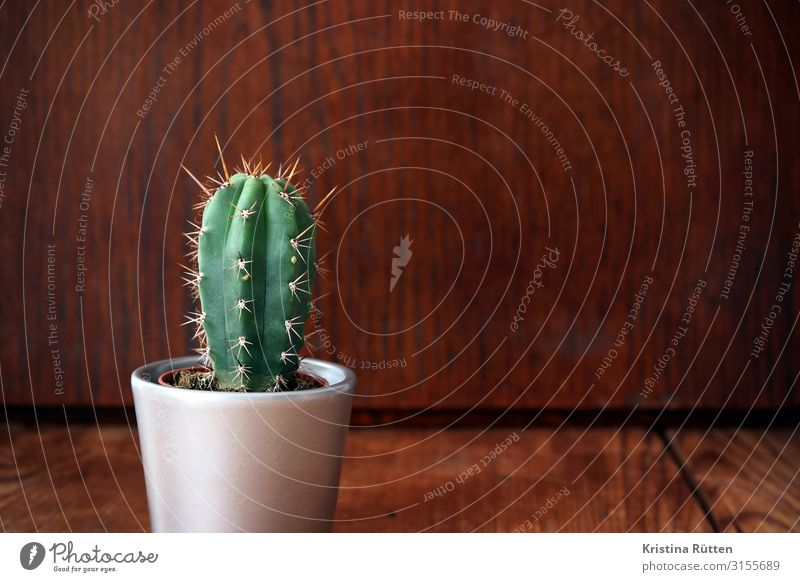 Small green cactus Decoration Plant Cactus Pot plant Wood Point Thorny Green stetsonia coryne thorny over the edge Houseplant inside Flowerpot Natural Organic