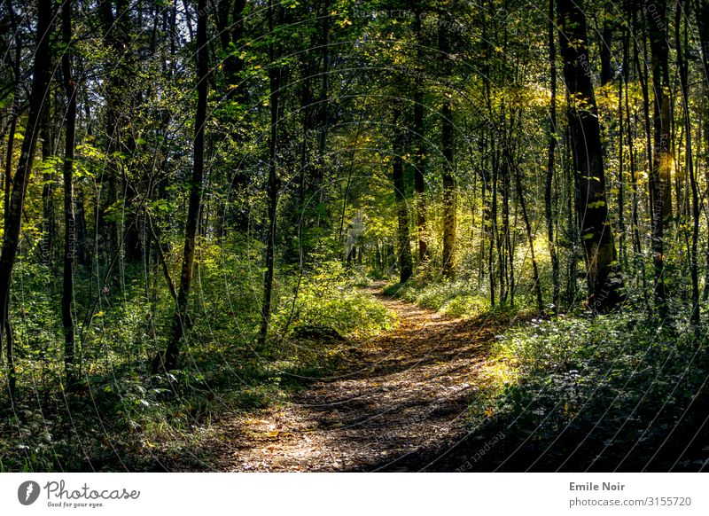 Walk in the Innaue Nature Landscape Plant Sun Sunlight Autumn Beautiful weather Tree Leaf Forest Hiking Colour photo Exterior shot Day