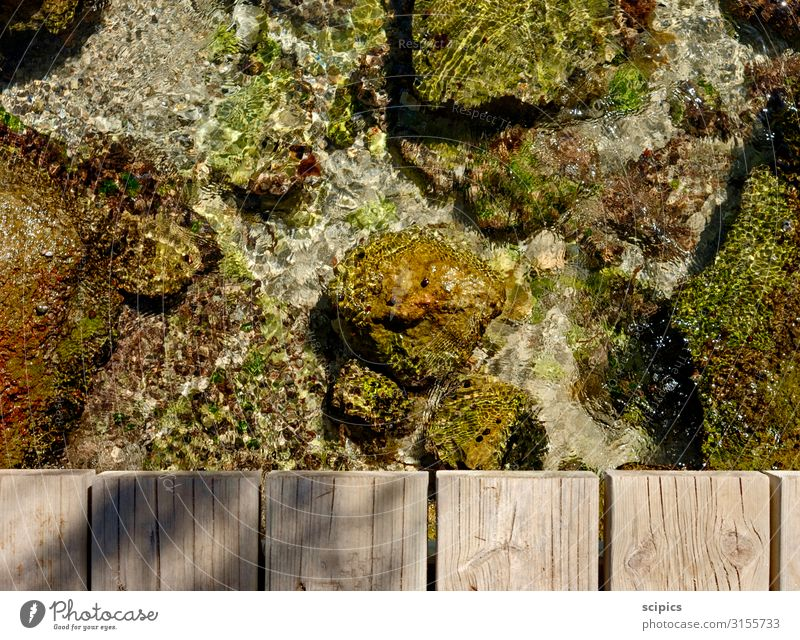 on the jetty Well-being Calm Swimming & Bathing Vacation & Travel Tourism Summer Summer vacation Ocean Dive Environment Water Climate Climate change Baltic Sea