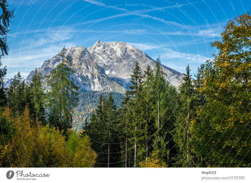 Alps in the Berchtesgaden region Environment Nature Landscape Plant Sky Autumn Beautiful weather Tree Forest Rock Mountain Peak Diet Fitness Going Walking