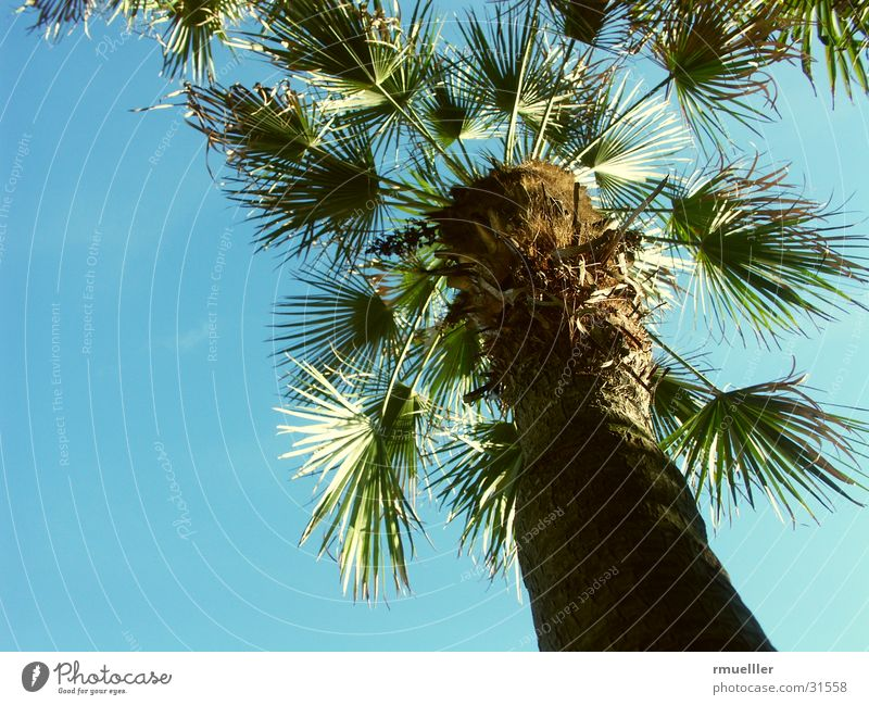Nature Sky Green Plant Summer Vacation & Travel Leaf Palm tree South
