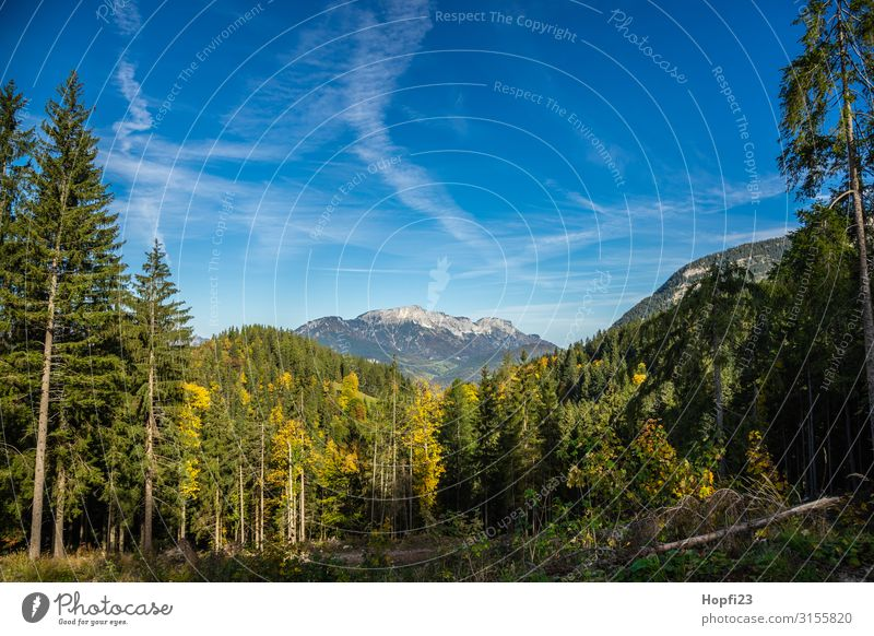 Alps in the Berchtesgaden region Environment Nature Landscape Plant Sky Clouds Sun Autumn Beautiful weather Tree Forest Rock Mountain Peak Diet Fitness Going