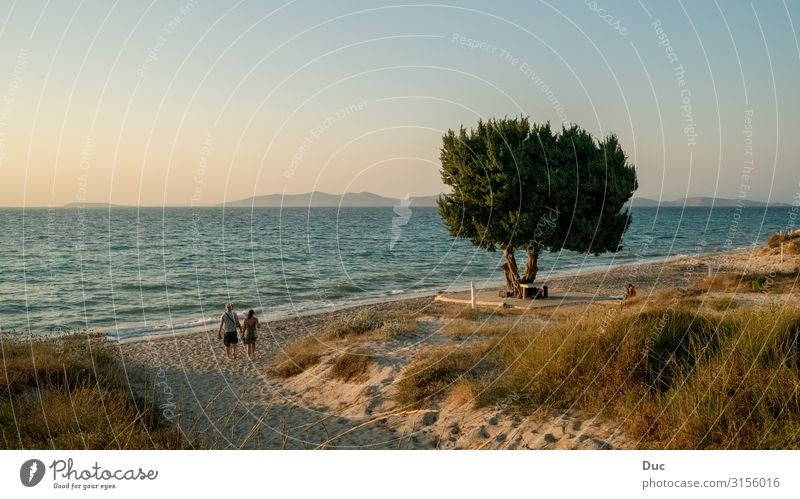 Sunset on Kos Island 2 Harmonious Senses Calm Meditation Cure Spa Freedom Summer Summer vacation Beach Ocean Sports Jogging Environment Nature Landscape Tree