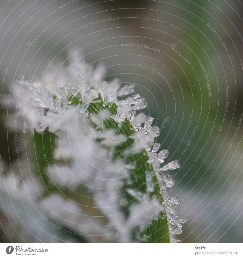 ice crystals Environment Nature Autumn Winter Ice Frost Plant Leaf Garden Freeze Cold Near Natural Beautiful Gray Green White Winter mood November mood