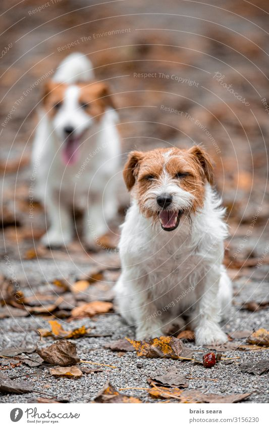 Two dogs in the park. Nature Dog Green White Tree Animal Leaf Joy Forest Autumn Funny Emotions Happy Grass Playing Together