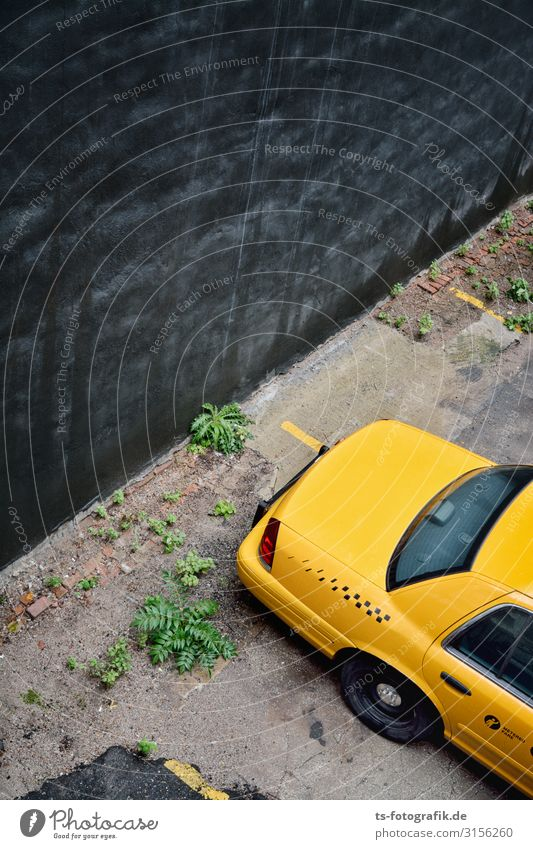 The Black Wall meets Yellow Cab in New York City Plant Fern Foliage plant Town Deserted Wall (barrier) Wall (building) Transport Means of transport