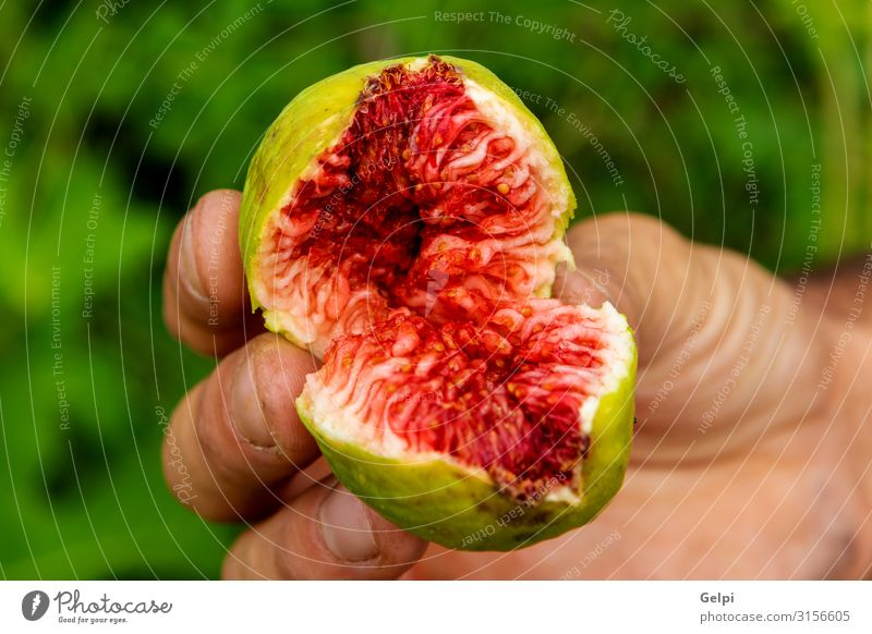 Someone showing a sweet fig Fruit Dessert Table Hand Nature Plant Tree Leaf Fresh Green Red Pain Colour Tradition food Fig Mature Sense of taste Organic Cut