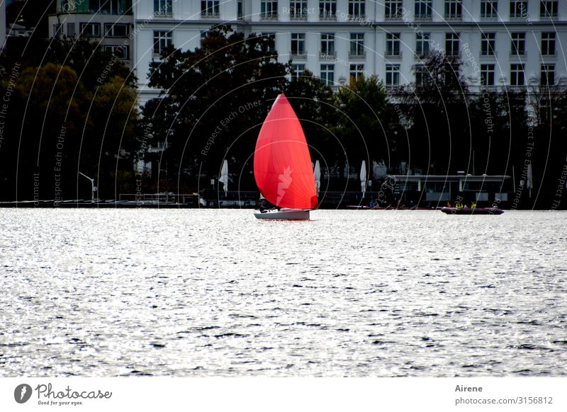 Courage to color | UT Hamburg Lakeside Town Port City Populated Facade Inland navigation Sailboat Movement Esthetic Exceptional Elegant Fresh Speed Gray Red Joy