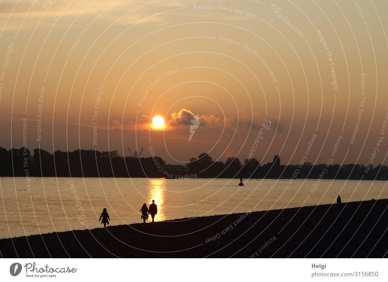 Silhouettes of people strolling in the evening sun on the Elbe beach in Hamburg Human being 3 Environment Nature Landscape Sky Clouds Autumn Beautiful weather