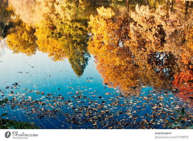 autumn mirroring Leisure and hobbies Vacation & Travel Trip Environment Nature Landscape Water Autumn Beautiful weather Plant Tree Park Meadow Pond Lake