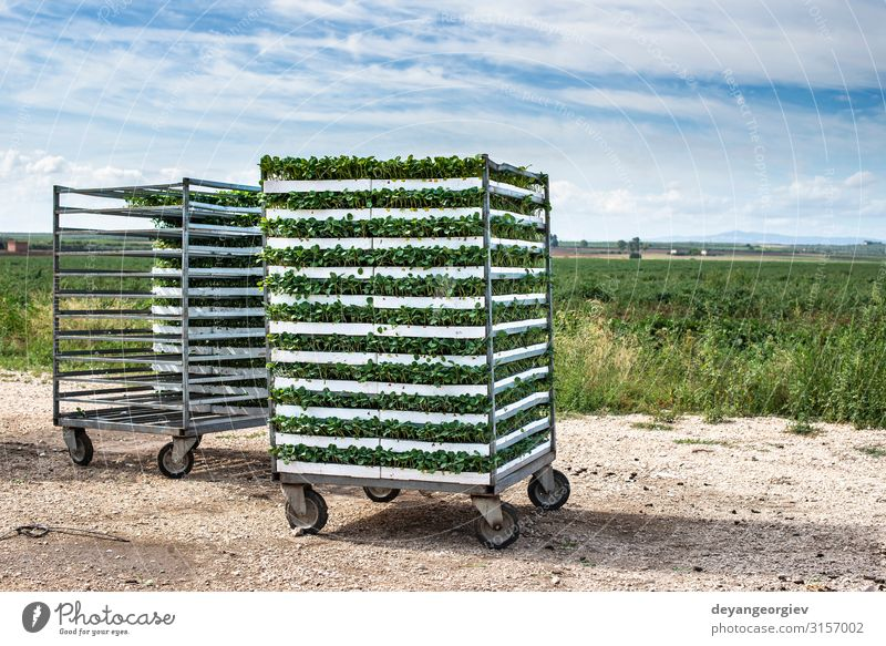 Seedlings in packages placed on shelving in the field. Vegetable Gardening Environment Nature Plant Leaf Plastic Growth Fresh Natural Farm shelf seedling