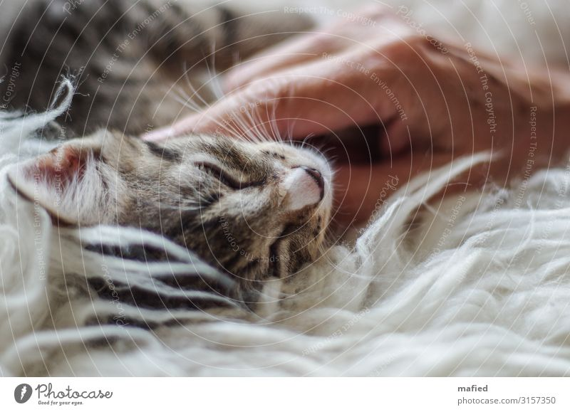 Cat White Animal Black Baby animal Happy Brown Pink Contentment To enjoy Touch Pet Trust Safety (feeling of)