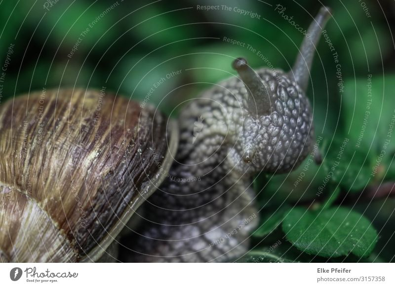 Weinbergschnecke Nature Animal Pet Wild animal Snail 1 Emotions Moody Distress Slowly Slow motion Peace Exterior shot Deserted Day