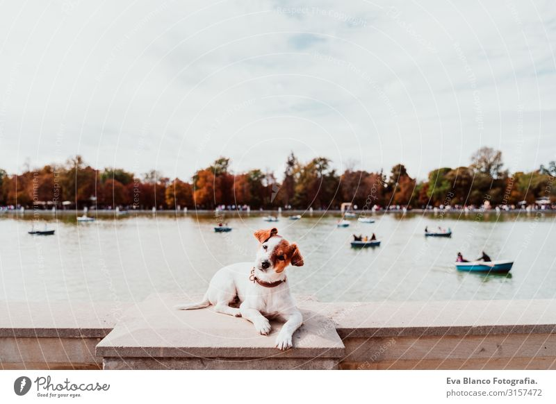 cute jack russell dog standing by Retiro park lake in madrid. Pets outdoors Dog Lake Jack Russell terrier Terrier Park City Town Watercraft enjoying owner Happy