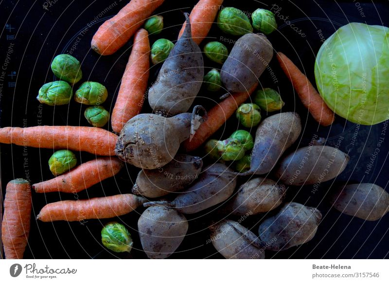 All kinds of vegetables Food Vegetable Red beet Carrot Brussels sprouts White cabbage Nutrition Vegetarian diet Healthy Life Well-being Feasts & Celebrations