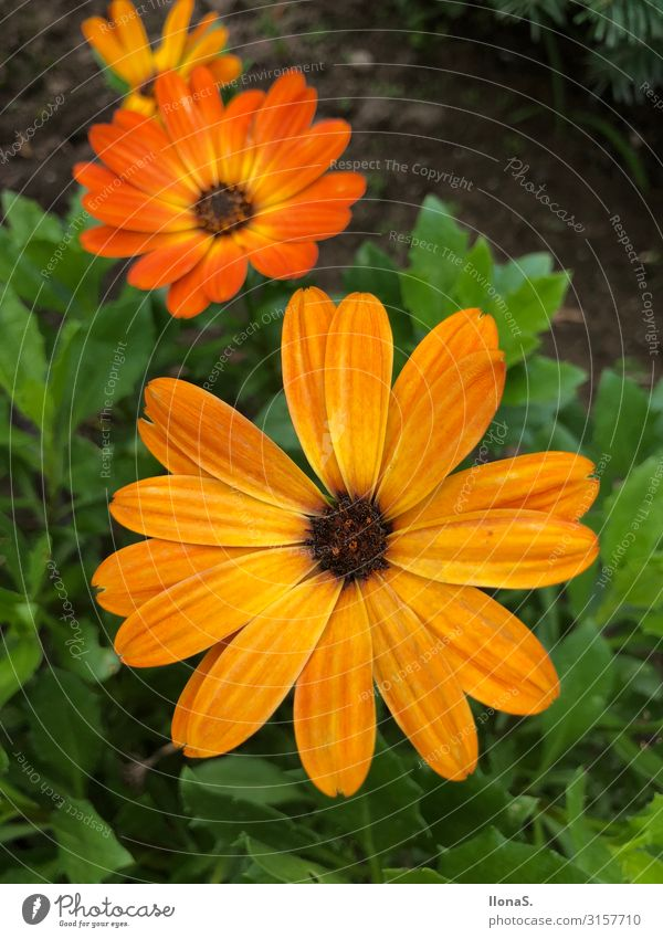 daisy Environment Nature Plant Animal Flower Grass Leaf Blossom Garden Meadow Blossoming Growth Green Orange Colour photo Multicoloured Exterior shot