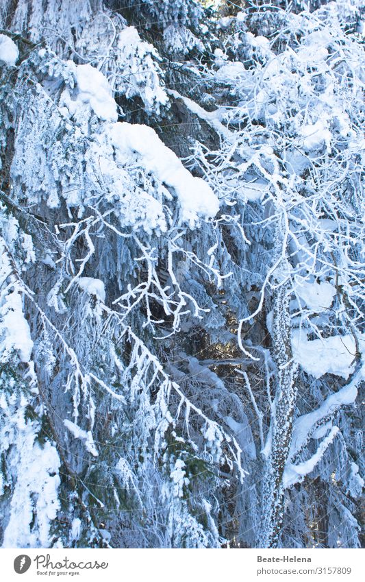 Baby, it`s cold outside Winter Snow Winter vacation Nature Weather Ice Frost Snowfall Tree Forest Black Forest Breathe Freeze Cold Serene Calm Endurance