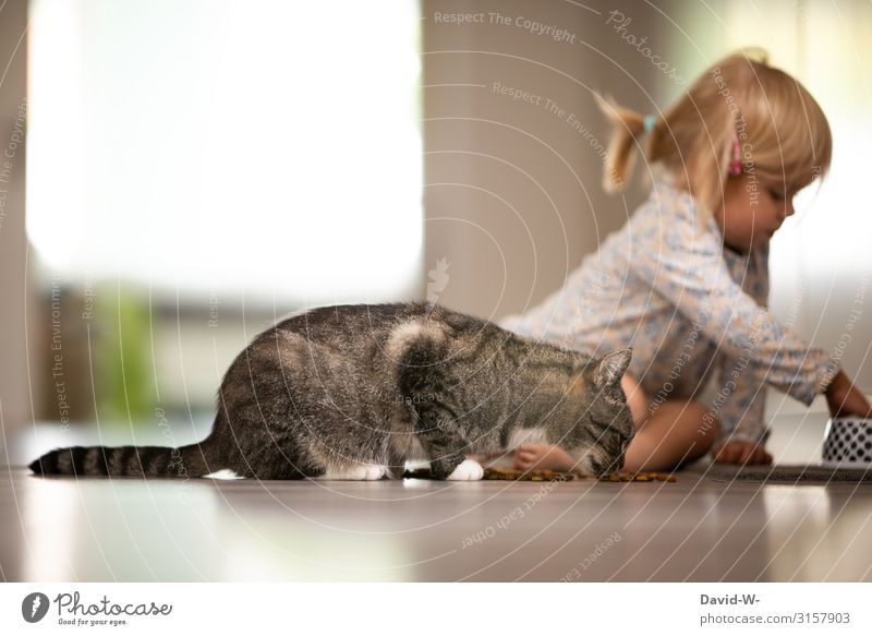 Cat Child Human being Animal Face Eating Life Love Feminine Playing Together Living or residing Flat (apartment) Elegant Infancy Sit