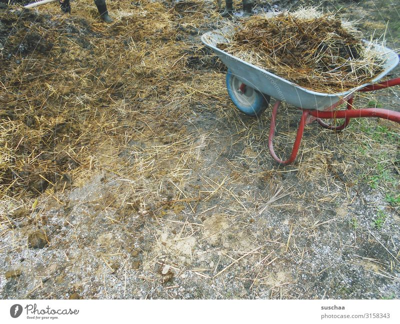 A pile of crap. Manure heap Feces Farm Dirty Malodorous Country life Agriculture Exterior shot Wheelbarrow Rural Livestock Barn Farm animal Cow Swine Cowshed