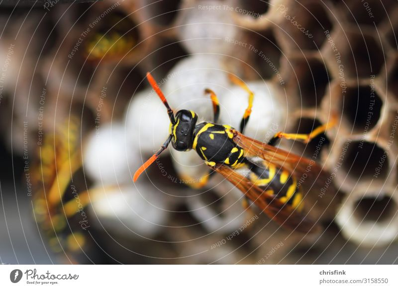 Wasp on wasp nest Living or residing Flat (apartment) House (Residential Structure) House building Nature Animal Spring Summer Wild animal Wasps 1