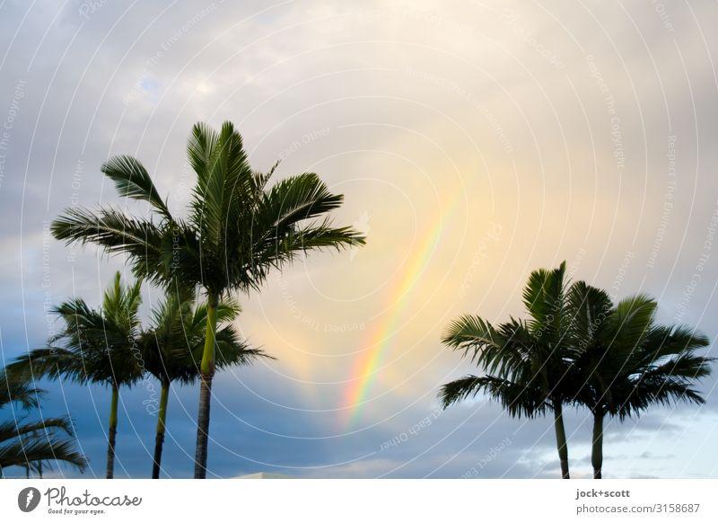 my wavelength Sky Beautiful Clouds Warmth Happy Above Moody Illuminate Free Beautiful weather Romance Hope Harmonious Kitsch Exotic Palm tree