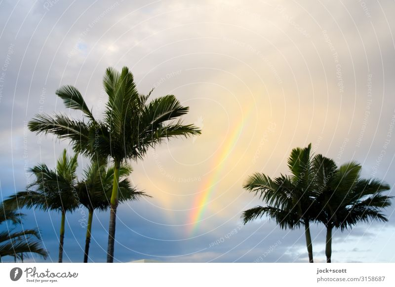 My wavelength Sky Clouds Beautiful weather Warmth Palm tree Queensland Rainbow Illuminate Exotic Kitsch Above luck Romance Hope Idyll Inspiration Ease