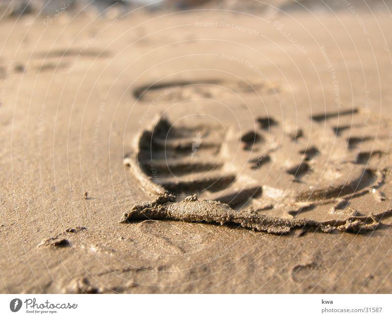 Coast Tracks