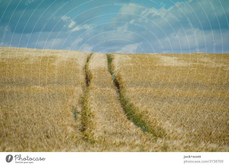 spring wheat Sky Summer Landscape Clouds Long Climate change Wheat Wheatfield Müritz Rut