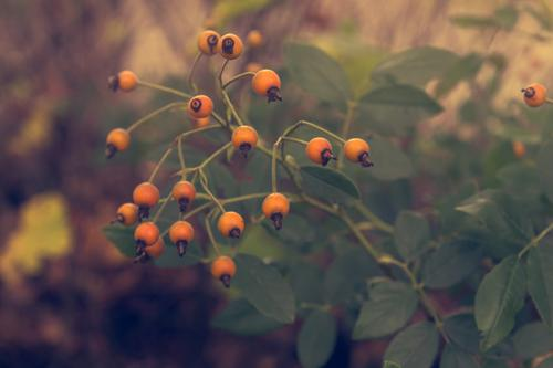 autumn fruits Nature Plant Autumn Bushes Park Blossoming Discover Faded Growth Orange Relaxation Leisure and hobbies Colour photo Multicoloured Exterior shot