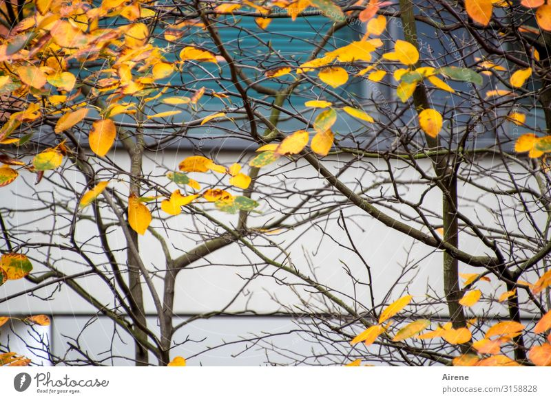 Autumn in the city | UT Hamburg Tree Autumn leaves Branch Facade To fall Dark Simple Town Orange Turquoise White Environment Time Clarity Thin Few Colour photo