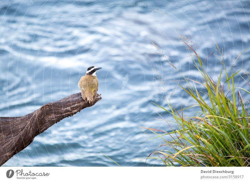 Vacation & Travel Nature Plant Blue Water Landscape Relaxation Animal Black Yellow Grass Bird Wild animal Sit Idyll Adventure