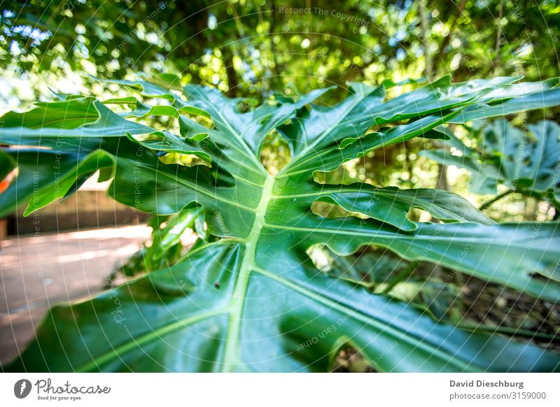 Vacation & Travel Nature Plant Green Animal Leaf Forest Yellow Environment Growth Idyll Beautiful weather Virgin forest Environmental protection Nature reserve