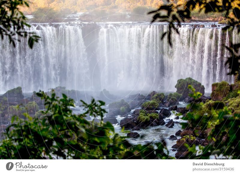 iguassu Vacation & Travel Trip Adventure Sightseeing Expedition Nature Landscape Plant Animal Water Beautiful weather Forest Virgin forest Waves River Waterfall