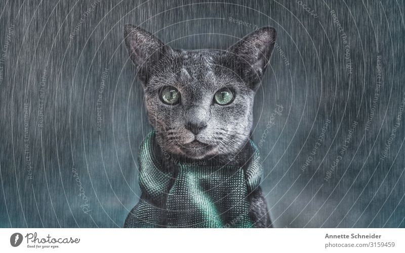 It's cold outside Animal Pet Cat Animal face 1 Scarf Gray Green Black Colour photo Exterior shot Neutral Background Looking into the camera