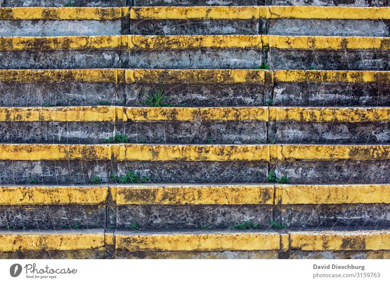 staircase Stone Concrete Line Yellow Gray Black Success Stairs Plant Weed Green Symmetry Colour photo Exterior shot Pattern Structures and shapes Deserted Day