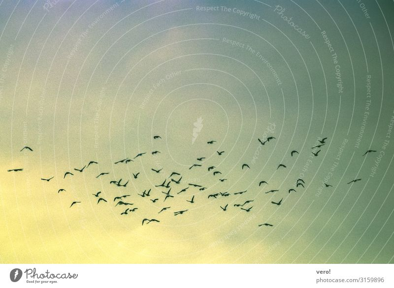 When the birds move on Freedom Summer Air Sky Bird Flock Observe Flying Vacation & Travel Together Infinity Natural Blue Yellow Green Longing Wanderlust Peace