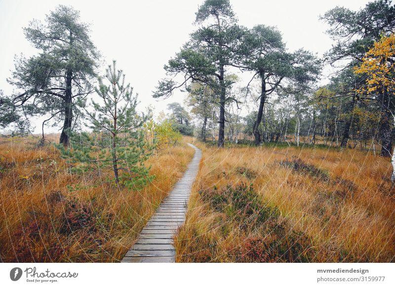 Hohes Venn Belgium path Lanes & trails High venn Nature