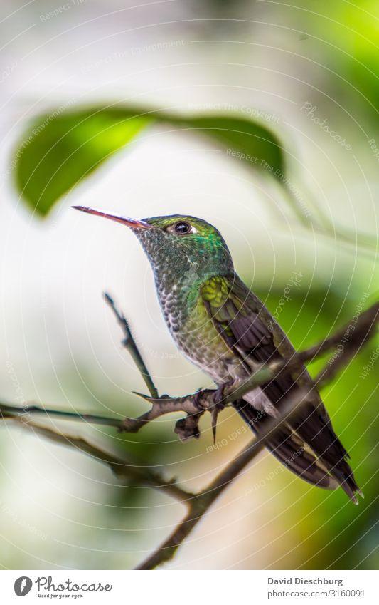 hummingbird Vacation & Travel Adventure Expedition Nature Plant Animal Beautiful weather Tree Forest Virgin forest Wild animal Bird 1 Yellow Green White Brazil